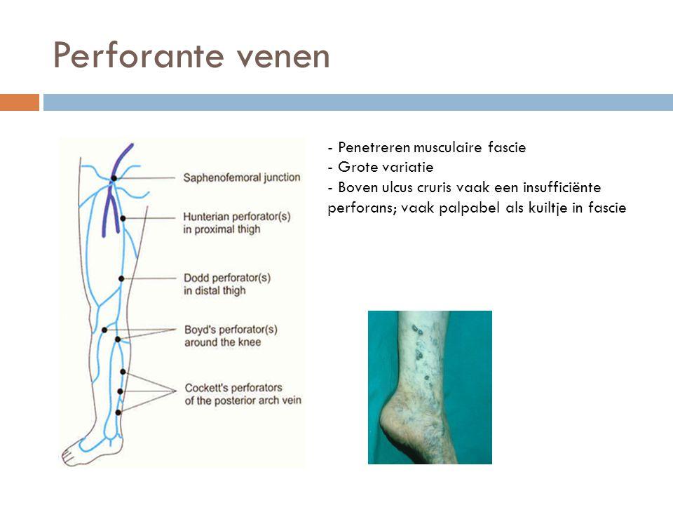 Perforante venen Hunter - Penetreren musculaire fascie - Grote variatie - Boven ulcus cruris vaak een insufficiënte perforans; vaak palpabel als kuilt