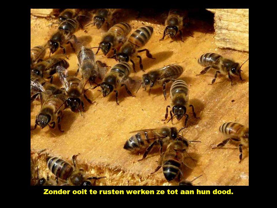 De gehuwden staan op bijenkorven. Symbool van een goed georganiseerd, spaarzaam en wijs huishouden.