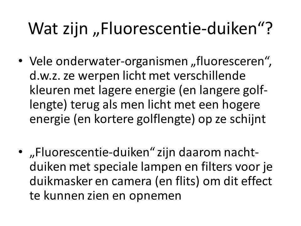 """Wat zijn """"Fluorescentie-duiken .• Vele onderwater-organismen """"fluoresceren , d.w.z."""
