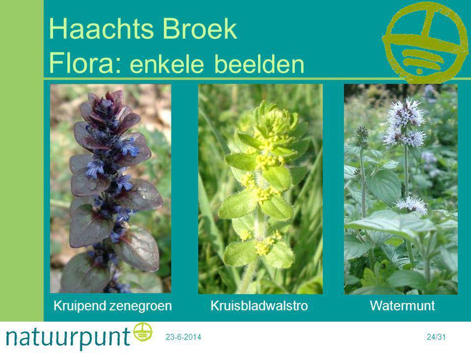 23-6-201424/31 Haachts Broek Flora: enkele beelden Kruipend zenegroen KruisbladwalstroWatermunt