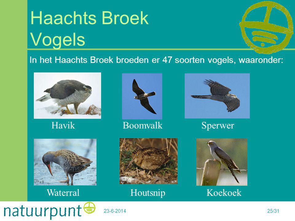 23-6-201425/31 Haachts Broek Vogels In het Haachts Broek broeden er 47 soorten vogels, waaronder: Havik Boomvalk Sperwer Waterral Houtsnip Koekoek