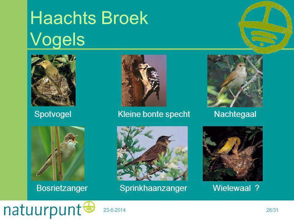 23-6-201426/31 Haachts Broek Vogels Spotvogel Kleine bonte specht Nachtegaal Bosrietzanger Sprinkhaanzanger Wielewaal ?