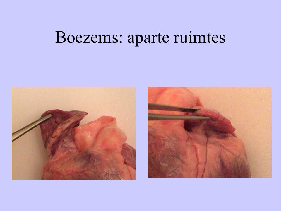 Boezems: aparte ruimtes