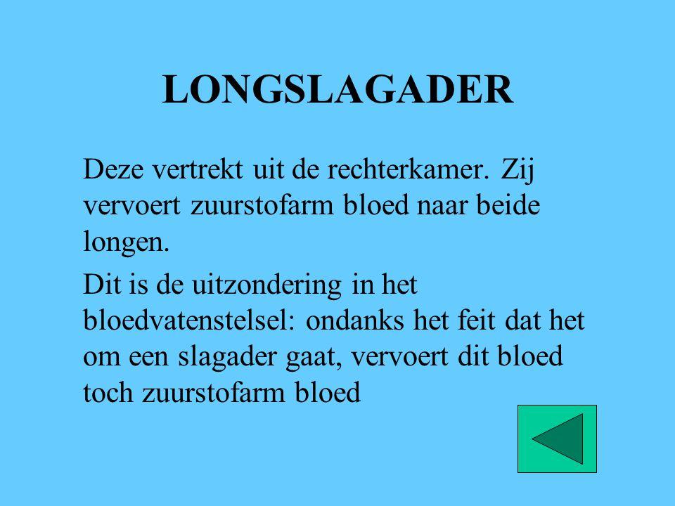 LONGSLAGADER Deze vertrekt uit de rechterkamer. Zij vervoert zuurstofarm bloed naar beide longen. Dit is de uitzondering in het bloedvatenstelsel: ond