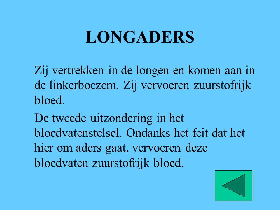 LONGADERS Zij vertrekken in de longen en komen aan in de linkerboezem. Zij vervoeren zuurstofrijk bloed. De tweede uitzondering in het bloedvatenstels