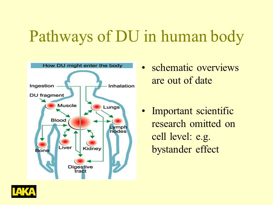 Pathways of DU in human body •schematic overviews are out of date •Important scientific research omitted on cell level: e.g.