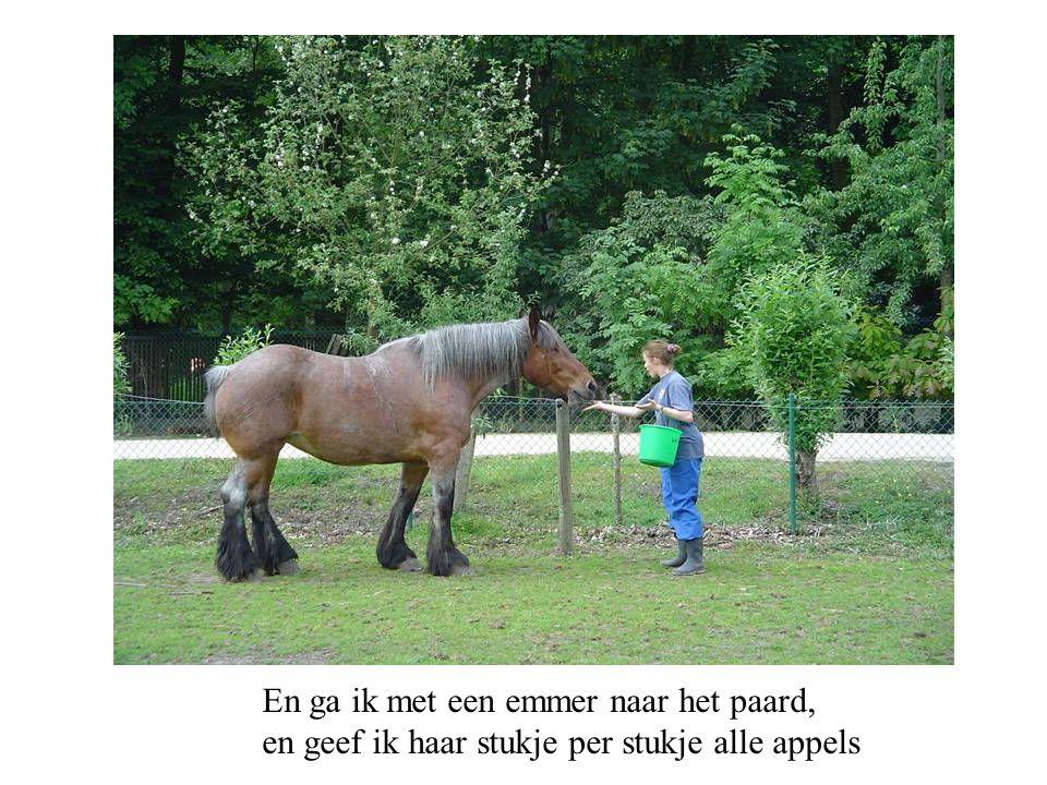 En ga ik met een emmer naar het paard, en geef ik haar stukje per stukje alle appels