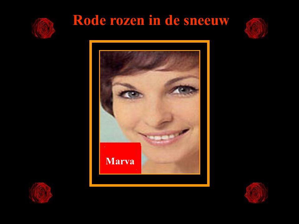 Marva Rode rozen in de sneeuw