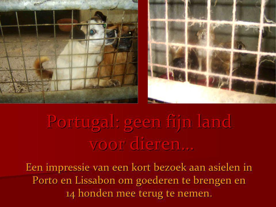 Er waren berichten binnengekomen bij de Stichting Abandoned Pets Foundation, dat de verzorging van de vele duizenden dieren in de tientallen asielen in Portugal soms ernstig tekort schoot, door gebrek aan geld, middelen en man- kracht.