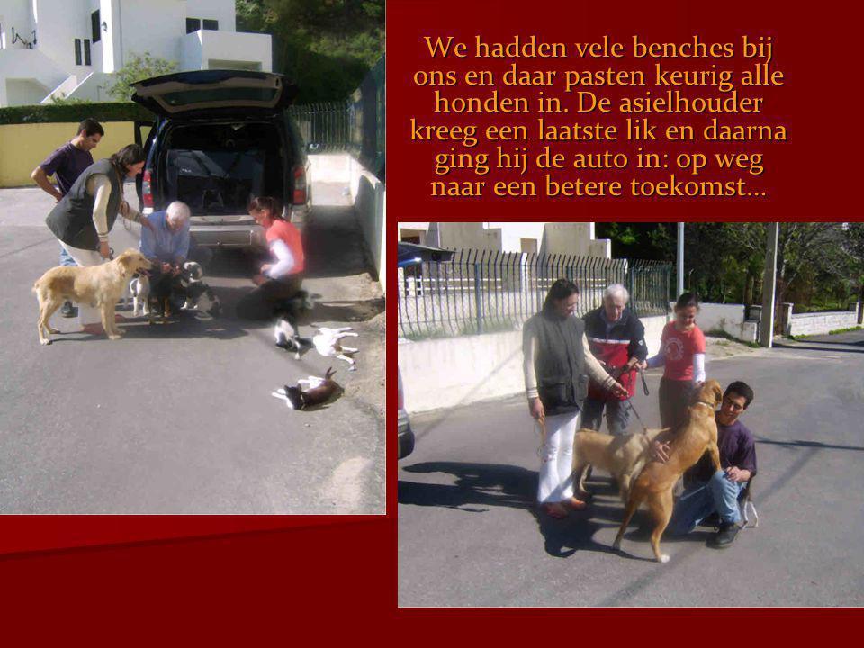 We hadden vele benches bij ons en daar pasten keurig alle honden in. De asielhouder kreeg een laatste lik en daarna ging hij de auto in: op weg naar e