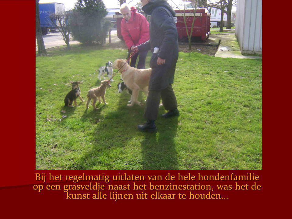 Bij het regelmatig uitlaten van de hele hondenfamilie op een grasveldje naast het benzinestation, was het de kunst alle lijnen uit elkaar te houden…