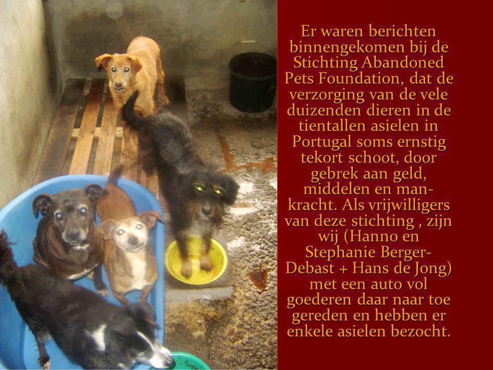 Er waren berichten binnengekomen bij de Stichting Abandoned Pets Foundation, dat de verzorging van de vele duizenden dieren in de tientallen asielen i