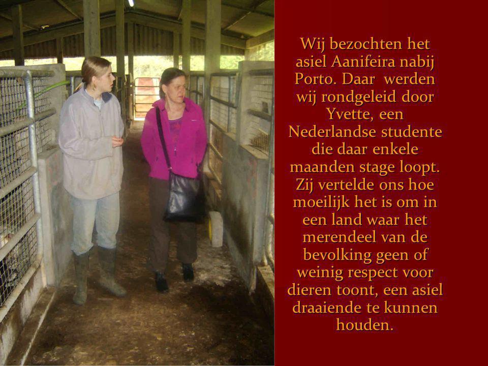 Wij bezochten het asiel Aanifeira nabij Porto. Daar werden wij rondgeleid door Yvette, een Nederlandse studente die daar enkele maanden stage loopt. Z