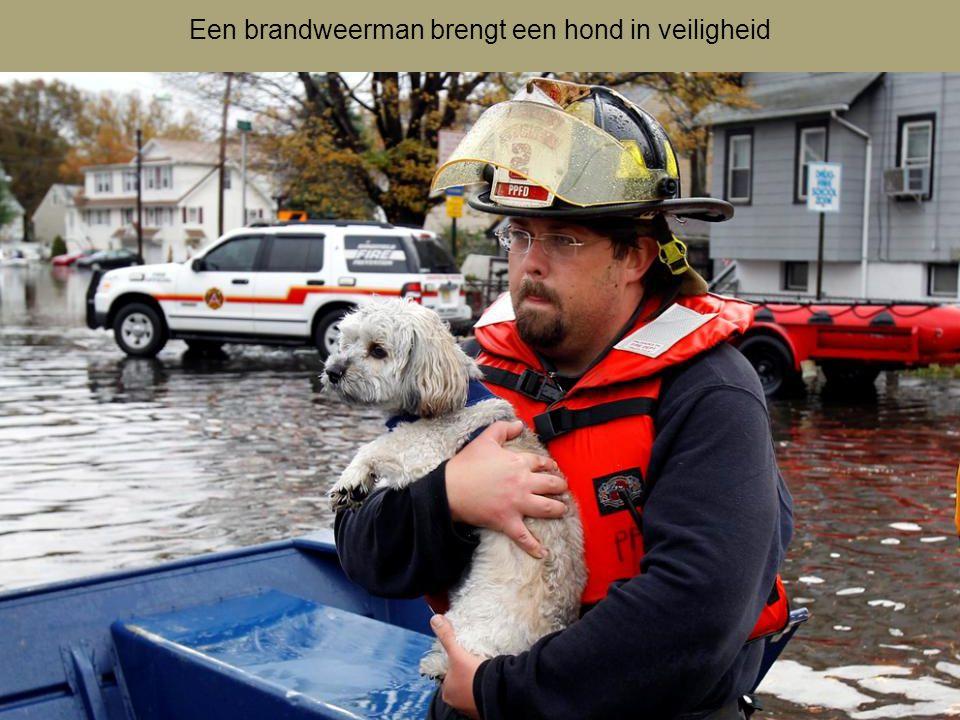 Een brandweerman brengt een hond in veiligheid