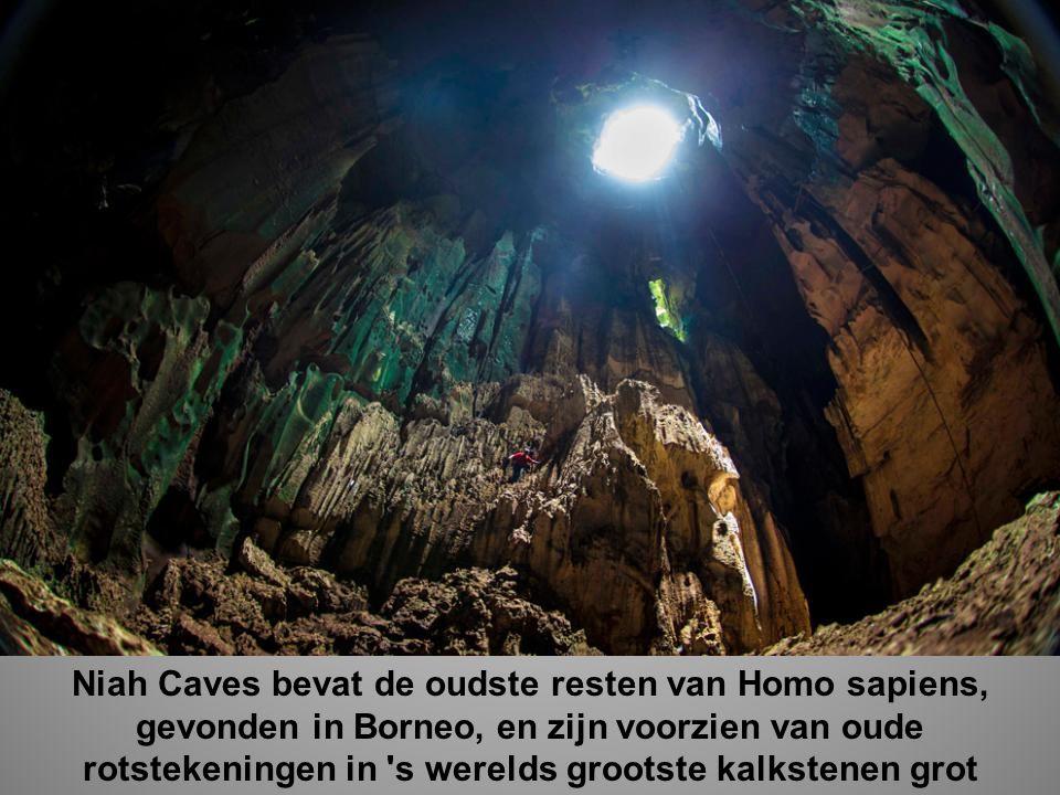 Niah Caves bevat de oudste resten van Homo sapiens, gevonden in Borneo, en zijn voorzien van oude rotstekeningen in s werelds grootste kalkstenen grot
