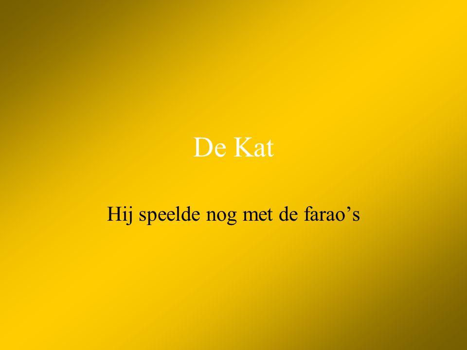 De Kat •Bouw van de kat •Soorten •Verzorging •Geschiedenis •Spreekwoorden •Foto's
