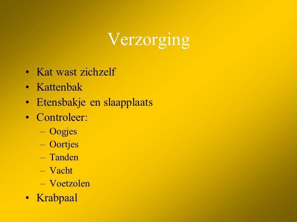 Verzorging •Kat wast zichzelf •Kattenbak •Etensbakje en slaapplaats •Controleer: –Oogjes –Oortjes –Tanden –Vacht –Voetzolen •Krabpaal