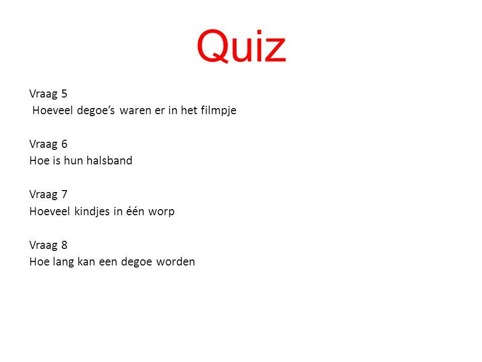 Quiz Vraag 1 Waar leven de degoe's Vraag 2 Wat leggen ze in hun gangen Vraag 3 Hoelang kan hun staart worden Vraag 4 Hoeveel weegt een degoe