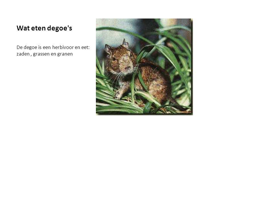 Vanwaar komen degoe's De degoe's komen uit het Zuidwesten van Zuid-Amerika: van de kust tot in het hoog Andesgebergte. We vinden ze vooral terug in Ch
