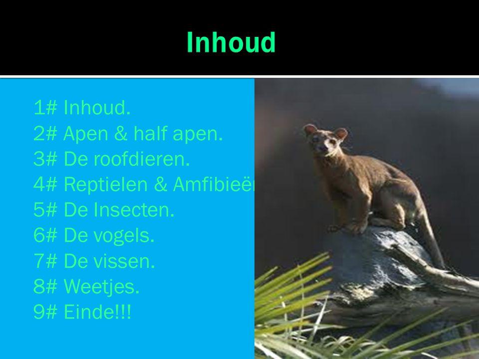 1# Inhoud. 2# Apen & half apen. 3# De roofdieren. 4# Reptielen & Amfibieën. 5# De Insecten. 6# De vogels. 7# De vissen. 8# Weetjes. 9# Einde!!!