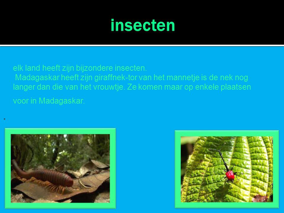 . elk land heeft zijn bijzondere insecten. Madagaskar heeft zijn giraffnek-tor van het mannetje is de nek nog langer dan die van het vrouwtje. Ze kome