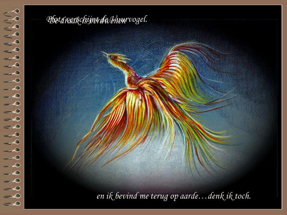 Plots verschijnt de Vuurvogel. De draak is verdwenen en ik bevind me terug op aarde…denk ik toch.