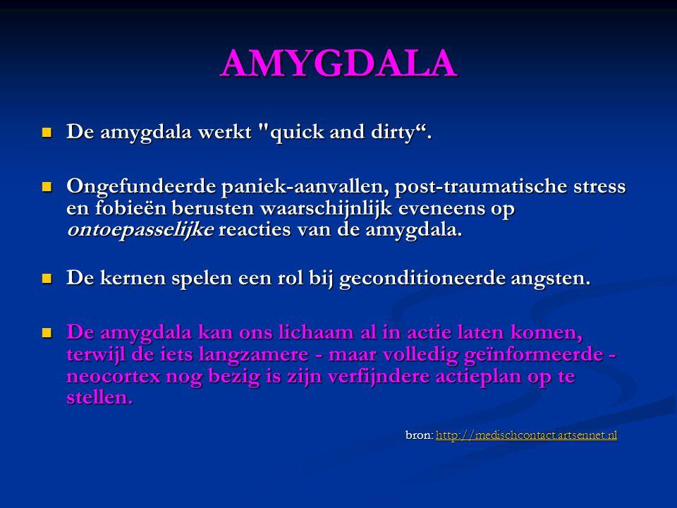 AMYGDALA  De amygdala werkt quick and dirty .
