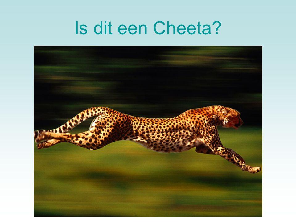Is dit een Cheeta?