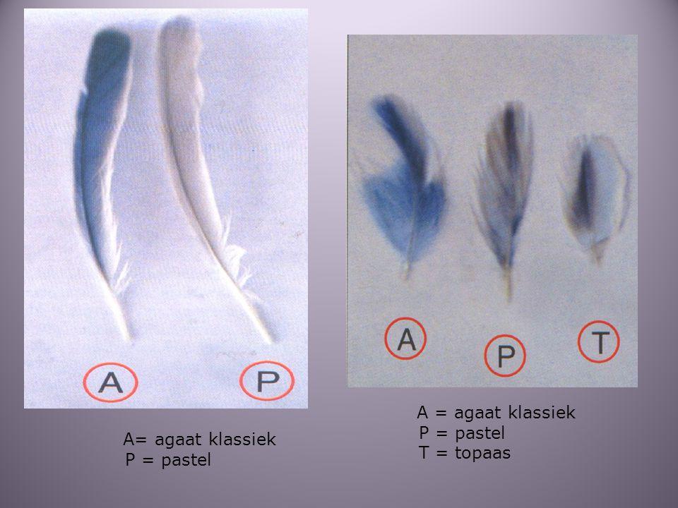 A = agaat klassiek P = pastel T = topaas A= agaat klassiek P = pastel
