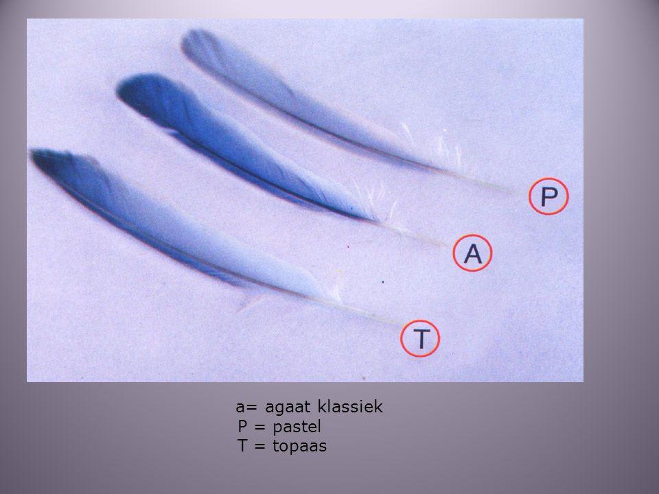 a= agaat klassiek P = pastel T = topaas