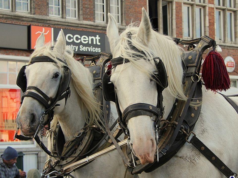 Jaarlijkse paardenkijkdag