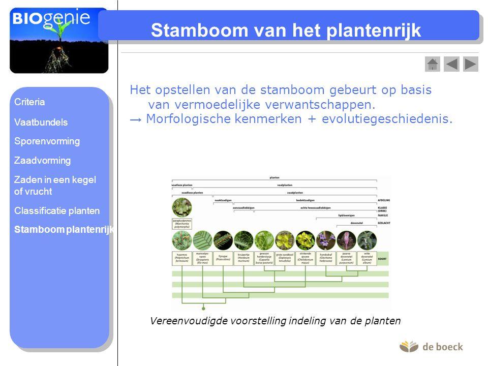 Stamboom van het plantenrijk Vereenvoudigde voorstelling indeling van de planten Het opstellen van de stamboom gebeurt op basis van vermoedelijke verw