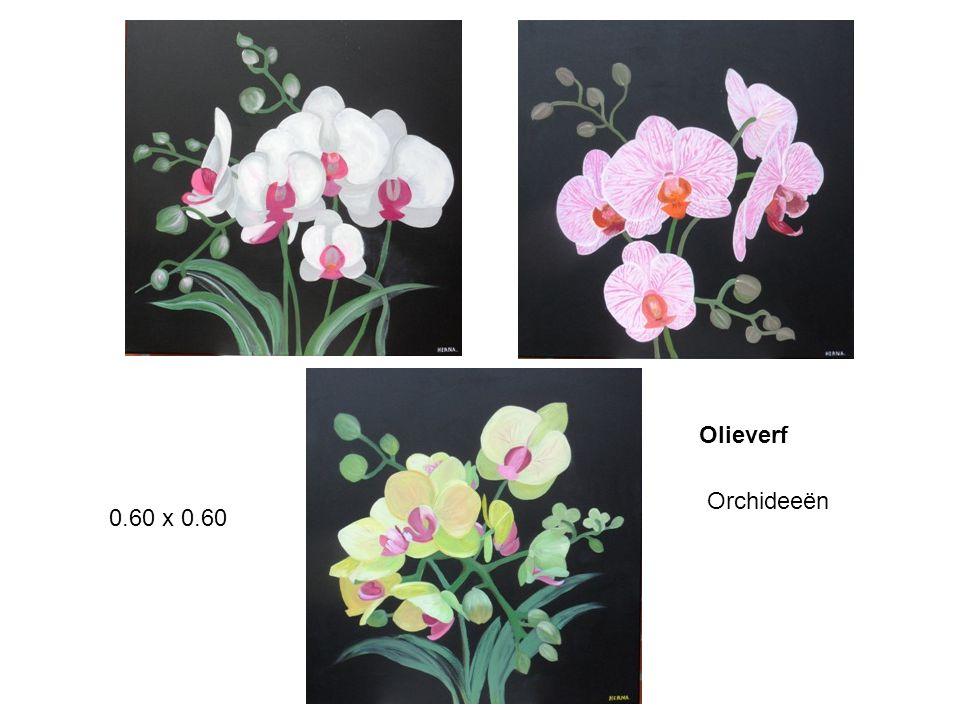 Olieverf Orchideeën 0.60 x 0.60