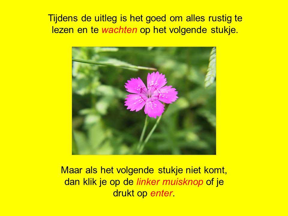 Ook planten planten zich voort 1.Onderdelen van de bloem 4.