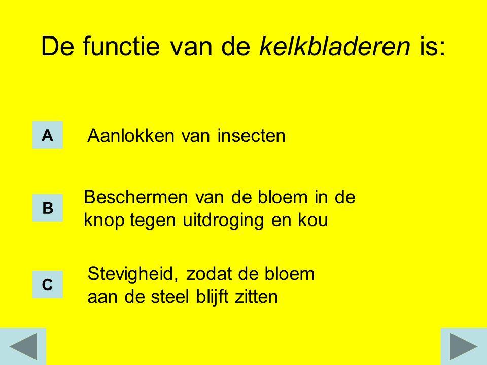 De functie van de kelkbladeren is: Aanlokken van insecten Beschermen van de bloem in de knop tegen uitdroging en kou Stevigheid, zodat de bloem aan de