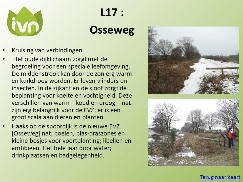 L17 : Osseweg • Kruising van verbindingen. • Het oude dijklichaam zorgt met de begroeiing voor een speciale leefomgeving. De middenstrook kan door de