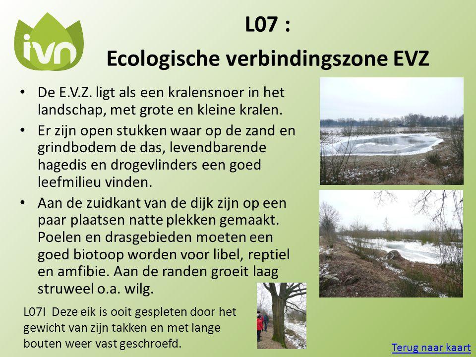 L07 : Ecologische verbindingszone EVZ Terug naar kaart L07I Deze eik is ooit gespleten door het gewicht van zijn takken en met lange bouten weer vast