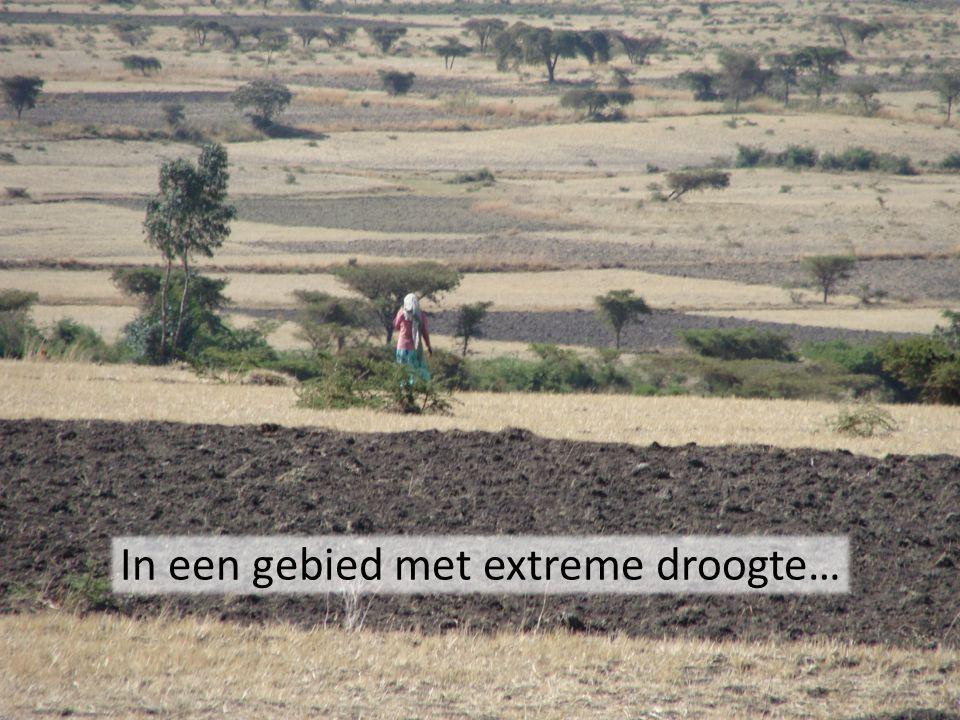 In een gebied met extreme droogte…