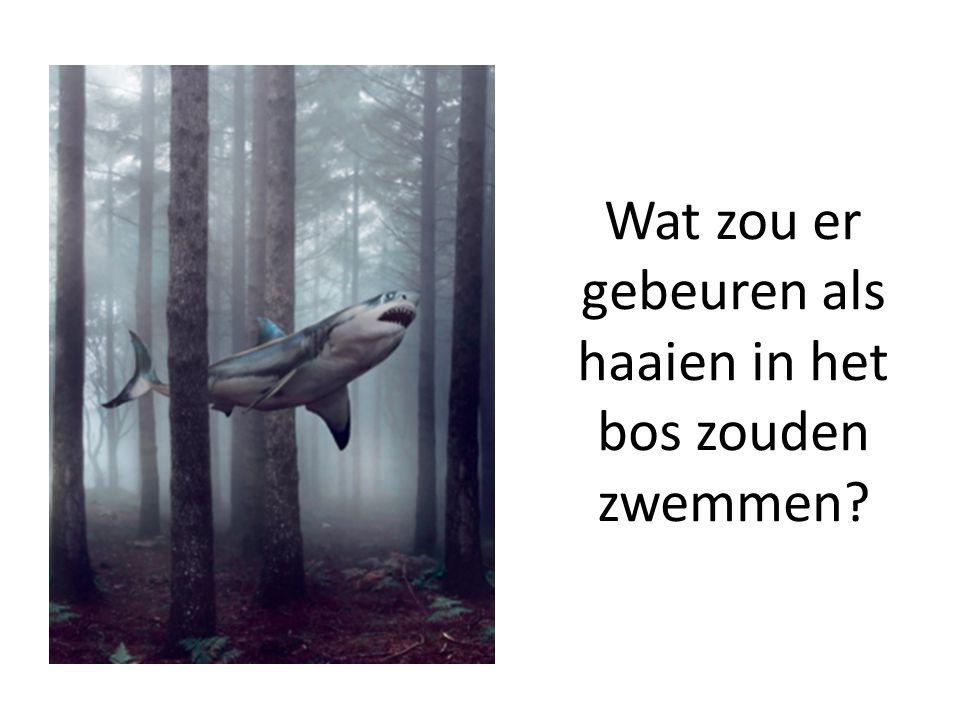 Wat zou er gebeuren als haaien in het bos zouden zwemmen?