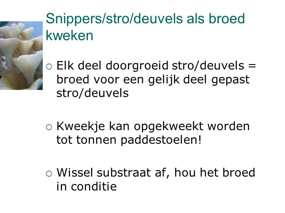 Snippers/stro/deuvels als broed kweken  Elk deel doorgroeid stro/deuvels = broed voor een gelijk deel gepast stro/deuvels  Kweekje kan opgekweekt wo
