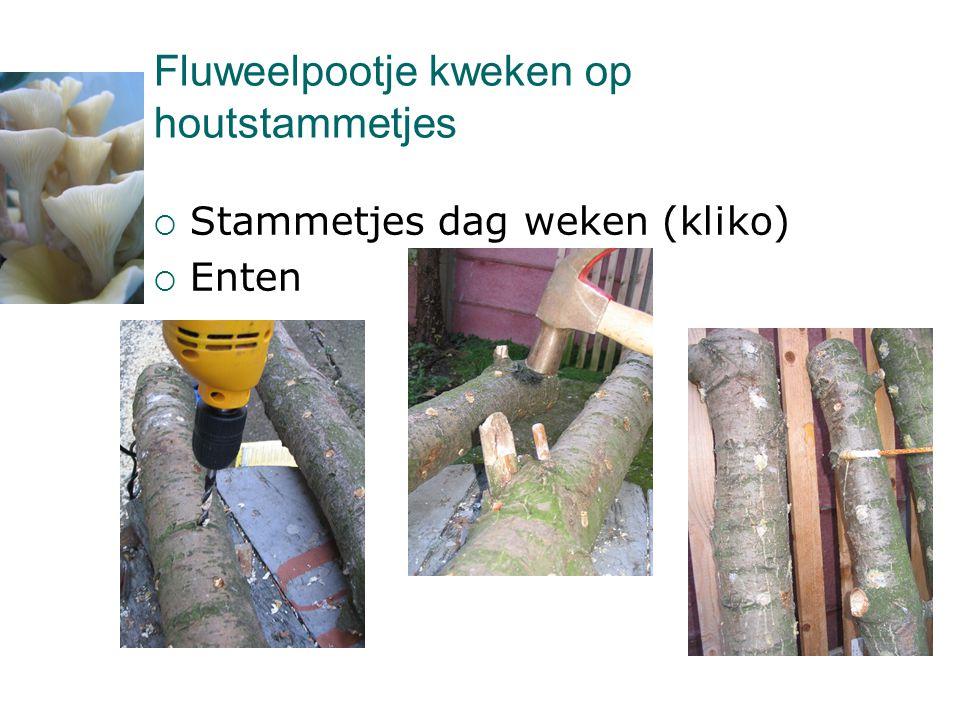 Fluweelpootje kweken op houtstammetjes  Stammetjes dag weken (kliko)  Enten