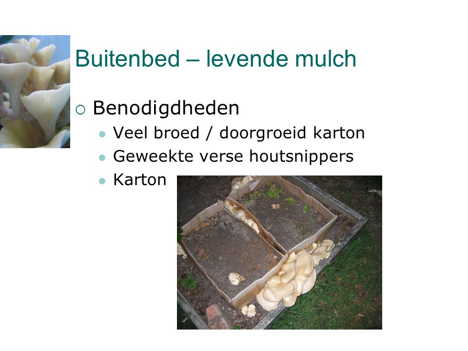 Buitenbed – levende mulch  Benodigdheden  Veel broed / doorgroeid karton  Geweekte verse houtsnippers  Karton