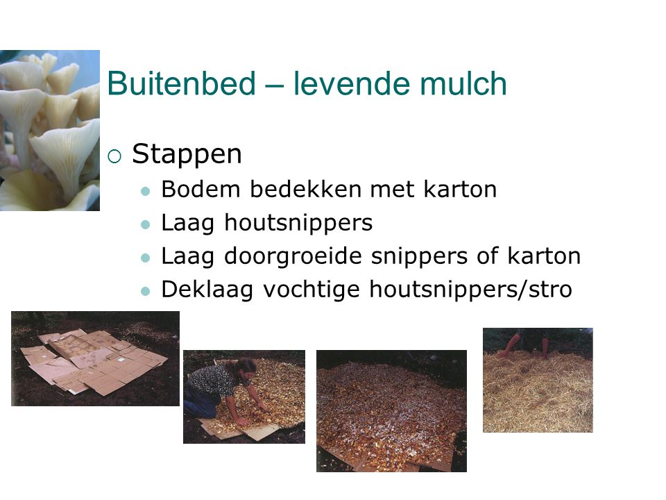Buitenbed – levende mulch  Stappen  Bodem bedekken met karton  Laag houtsnippers  Laag doorgroeide snippers of karton  Deklaag vochtige houtsnipp