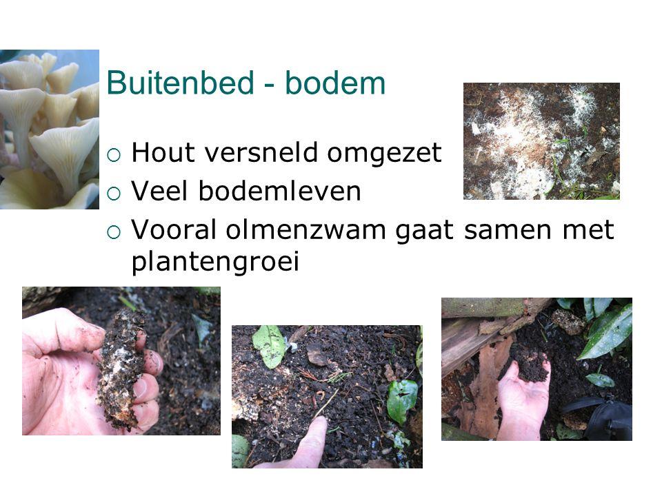 Buitenbed - bodem  Hout versneld omgezet  Veel bodemleven  Vooral olmenzwam gaat samen met plantengroei