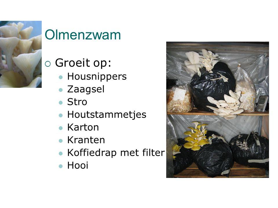 Olmenzwam  Groeit op:  Housnippers  Zaagsel  Stro  Houtstammetjes  Karton  Kranten  Koffiedrap met filter  Hooi