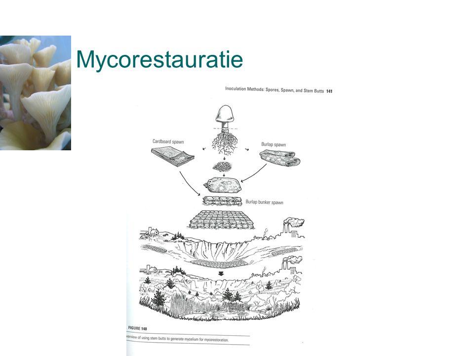 Mycorestauratie