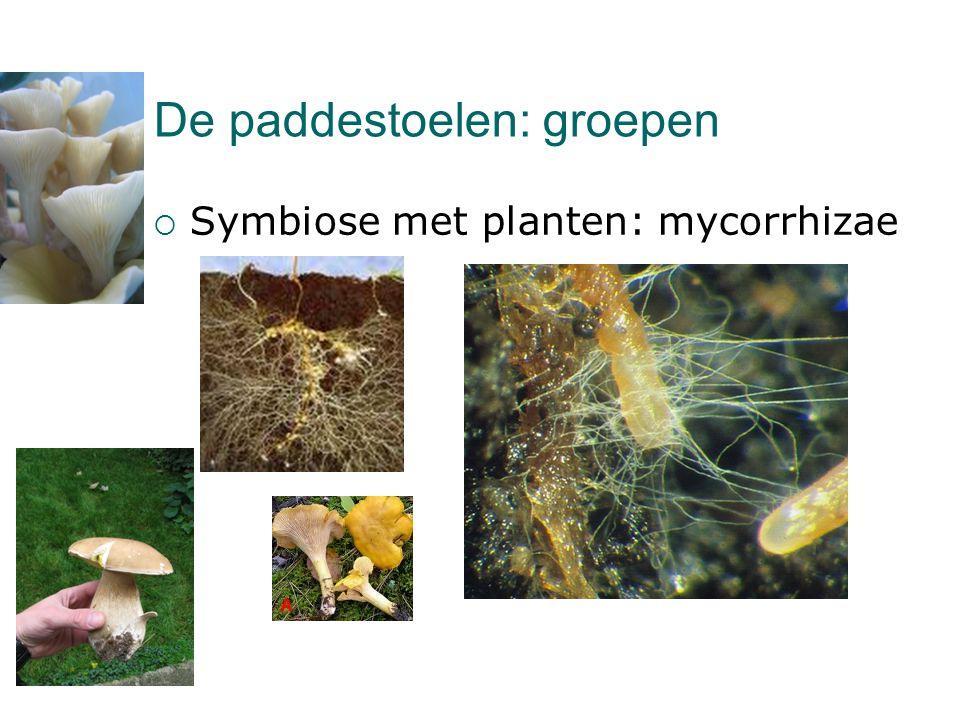 De paddestoelen: groepen  Symbiose met planten: mycorrhizae