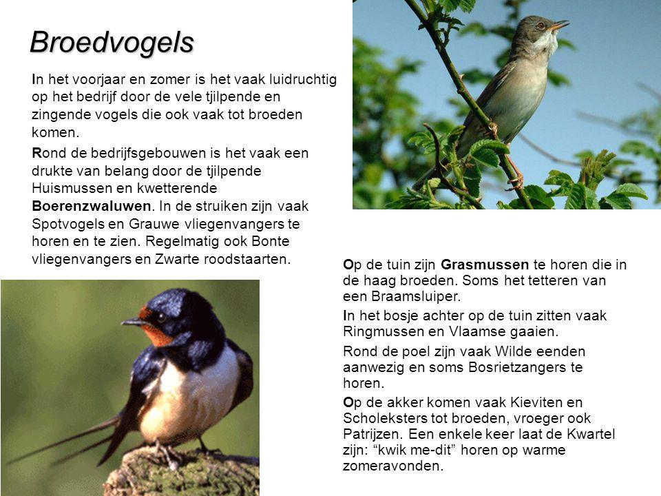 Broedvogels In het voorjaar en zomer is het vaak luidruchtig op het bedrijf door de vele tjilpende en zingende vogels die ook vaak tot broeden komen.