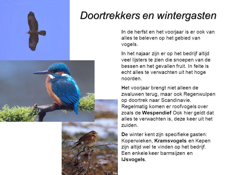 Doortrekkers en wintergasten In de herfst en het voorjaar is er ook van alles te beleven op het gebied van vogels.