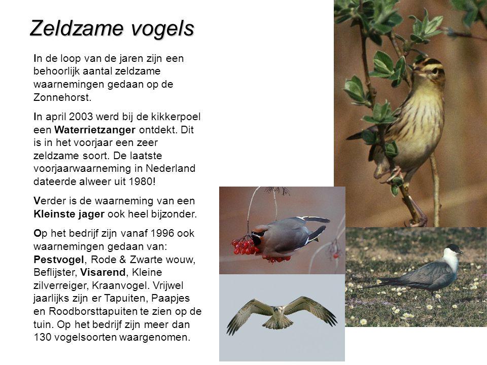 Zeldzame vogels In de loop van de jaren zijn een behoorlijk aantal zeldzame waarnemingen gedaan op de Zonnehorst.